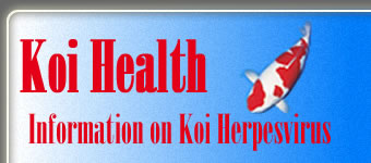 Koi Health - Information on Koi Herpesvirus